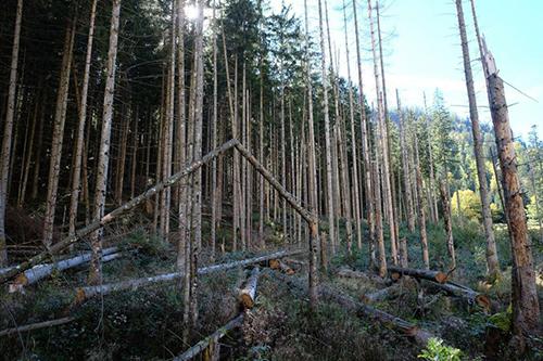 Gibt es ein neues Baumsterben in Mitteleuropa?