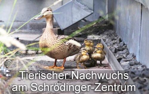 Enten auf dem Dach des Erwin Schrödinger-Zentrums in Berlin Adlershof. Bild : WISTA